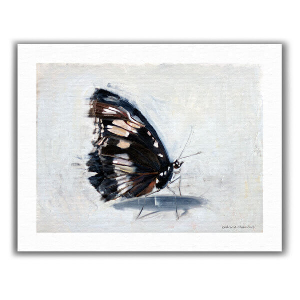 """Butterflies and Hurricanes"" Fine Art Print"